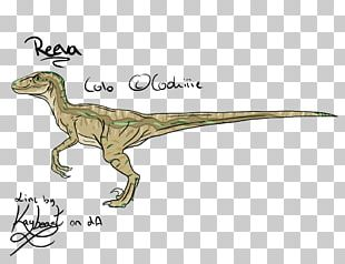 Velociraptor Tyrannosaurus Terrestrial Animal PNG