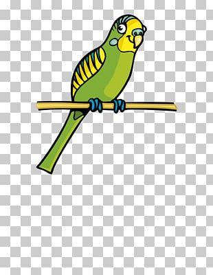 Parrot Bird Cartoon PNG