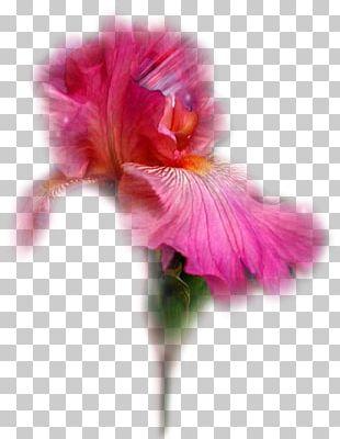 Flower Tulip Garden Roses Irises PNG