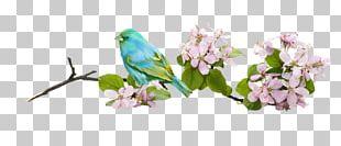 Bird Flower Branch PNG