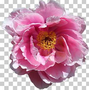 Flower Garden Blossom Bloom Desktop PNG