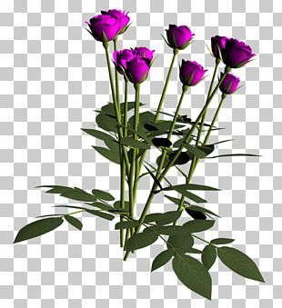Garden Roses Cabbage Rose Still Life: Pink Roses Cut Flowers PNG