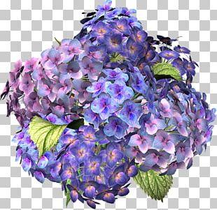 Flower Hydrangea Desktop PNG