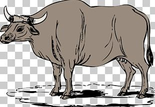 Cattle Water Buffalo Ox PNG