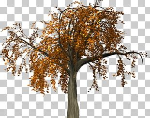 Twig Tree Trunk Autumn PNG