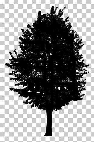 Fir Tree Black And White PNG