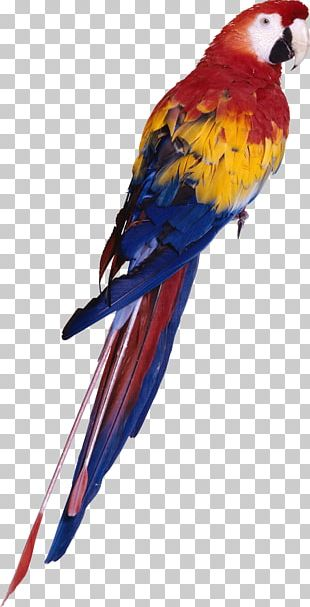 Parrot Red-and-green Macaw Bird PNG