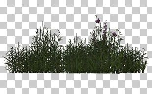 Plant Tree Grasses 3D Rendering PNG