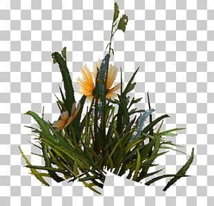 Floral Design Grasses Plant Stem Flower PNG