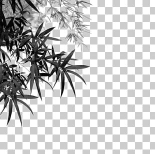 Bamboo Ink Wash Painting ASP.NET MVC PNG
