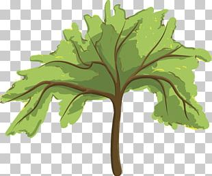 Family Tree Child PNG