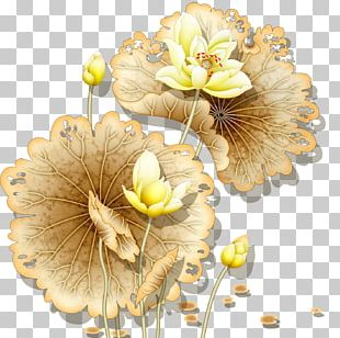 Nelumbo Nucifera Wall Painting PNG