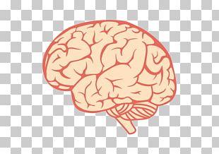 Human Brain Science PNG
