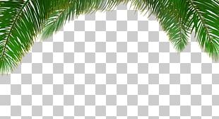 Arecaceae Tree Euclidean Leaf PNG