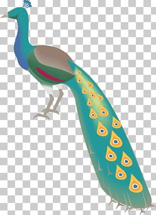 Indian Peafowl Bird Feather PNG