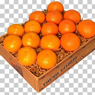 Clementine Tangerine Palm Beach Groves Mandarin Orange Tangelo PNG