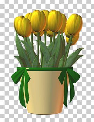 Tulip Cut Flowers Floral Design Plant Stem PNG