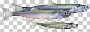Sardine Fish Products Coho Salmon Mackerel Oily Fish PNG