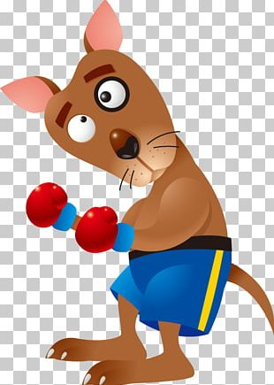 Boxing Kangaroo Cartoon PNG