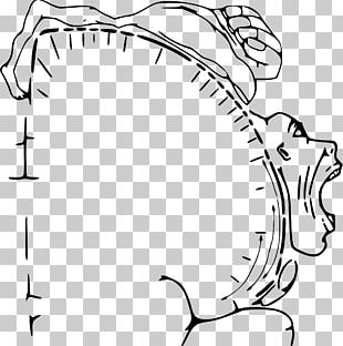 Cortical Homunculus Brain Cerebral Cortex Human Body PNG