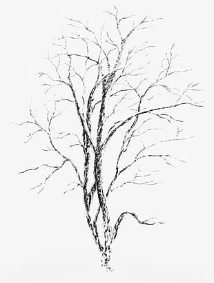 Snow-covered Trees PNG