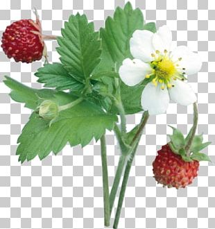 Musk Strawberry Fruit Food PNG