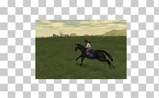 Stallion Mustang Eventing Mare Steppe PNG