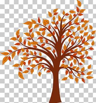 Autumn Cartoon Tree PNG