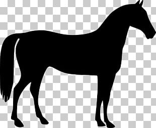 Mustang American Quarter Horse Tennessee Walking Horse Pony PNG