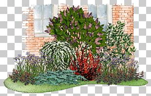 Common Lilac Flower Garden Shrub Tree PNG