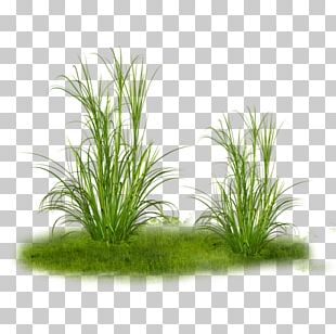 Grass Tree PNG