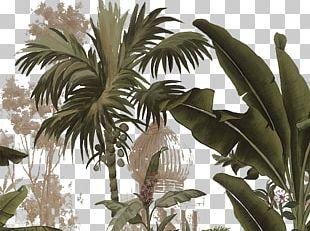 Yanoda Arecaceae Tropics Plant PNG