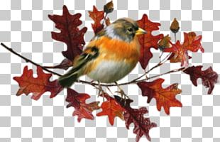 Bird Autumn Let's Go Rain Leaf PNG