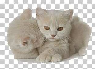 Kitten Cat Dog Animaatio PNG