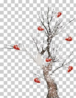 Twig Tree Pine PNG