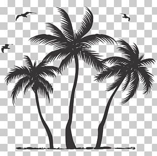 Coconut Asian Palmyra Palm Tree Arecaceae PNG