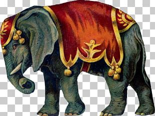 Circus Elephant PNG
