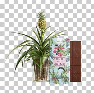 Pineapple Juice Embryophyta Sweet And Sour Bromeliads PNG