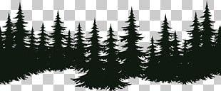 Spruce Fir Tree Pine Evergreen PNG