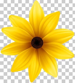 Flower Yellow Blue PNG