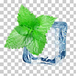 Iced Tea Mint Electronic Cigarette Aerosol And Liquid Menthol PNG