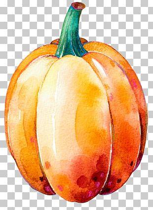 Pumpkin Calabaza Gourd Winter Squash Thanksgiving Dinner PNG