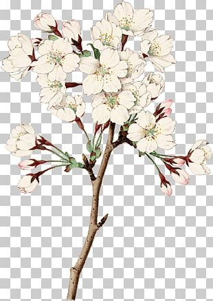 Floral Design Cut Flowers Cherry Blossom PNG