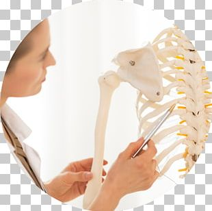 Human Anatomy & Physiology Anatomy & Physiology Made Incredibly Easy The Skeletal System PNG