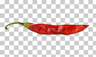 Chili Pepper Red Capsicum PNG