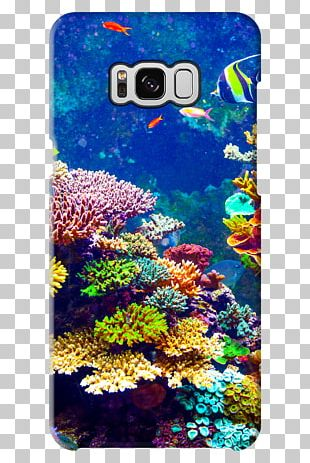Fauna Flora Coral Reef Silicon X-tal Reflective Display PNG