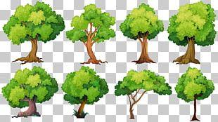 Tree Planting Illustration PNG