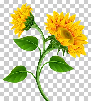 Common Sunflower Pixel PNG