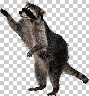 Raccoon Squirrel Nuisance Wildlife Management Dog PNG