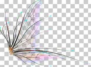 Tooth Fairy Portable Network Graphics Tinker Bell PNG